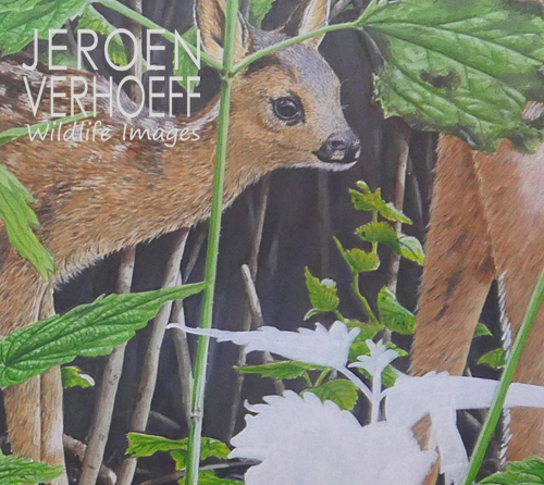 roe-deer-painting-unfinished-verhoeff-500